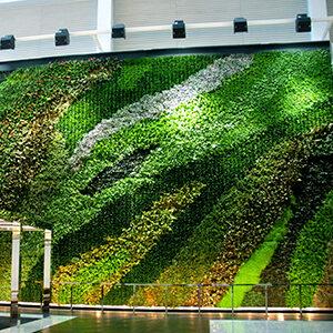 Muros verde hard co